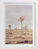 Online Designer Bedroom California Desert