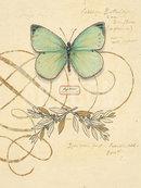 Online Designer Living Room Scripted Papillon Print