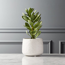 Online Designer Combined Living/Dining potted faux succulent white pot