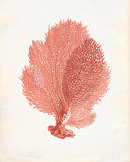Online Designer Combined Living/Dining Vintage Sea Fan Coral Print 8x10 P251