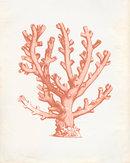 Online Designer Combined Living/Dining Vintage Ocean Coral Kelp Seaweed Coral Print 8x10 P255