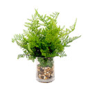 Online Designer Bedroom Fresh Fern in Vase