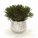 Online Designer Combined Living/Dining Oasis Platys Foliage Desk Top Plant in Planter by Distinctive Designs