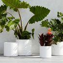 Online Designer Combined Living/Dining pot