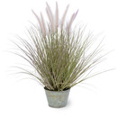 Online Designer Living Room Dogtail Grass in Round Metal Pot