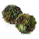 Online Designer Kitchen Succulent Ball
