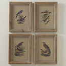 Online Designer Living Room Illustrated Birds Framed Prints