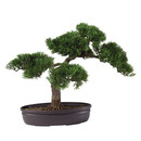 Online Designer Kitchen Silk Cedar Bonsai Desk Top Plant in Planter by Nearly Natural