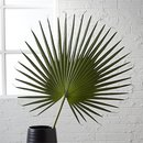 Online Designer Hallway/Entry fan palm