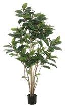 Online Designer Studio Darby Home Co Rubber Foliage Tree in Pot