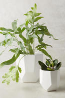 Online Designer Living Room Cut Ceramic Planter