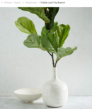 Online Designer Living Room Fiddle Leaf Fig Branch