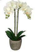 Online Designer Living Room Double Stem Orchid Arrangement in Pot
