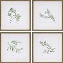 Online Designer Kitchen 'Herbs' 4 Piece Framed Graphic Art Print Set