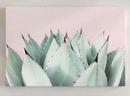 Online Designer Bedroom 'Sweet Succulents' Graphic Art Print