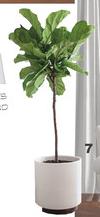 Online Designer Living Room Ceramic Pot Planter with Saucer by Bloomingville | white