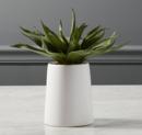 Online Designer Combined Living/Dining potted aloe