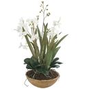 Online Designer Living Room Orchid Planter