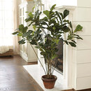 Online Designer Living Room Fiddle Leaf Tree