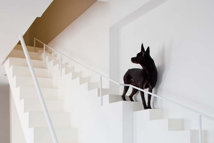 how to make dog stairs out of boxes