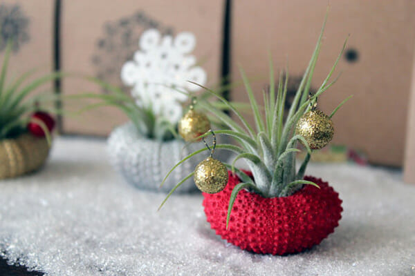 top Christmas holiday decorations plants