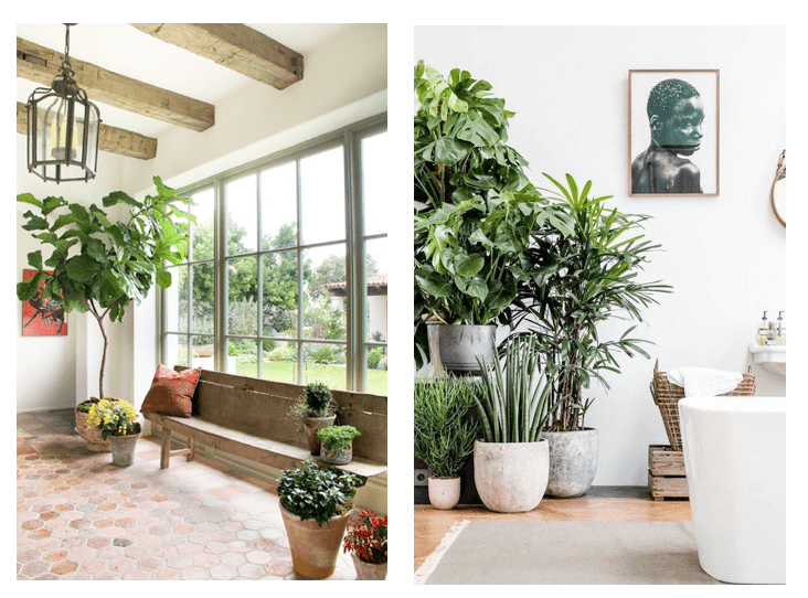 summer interior design trends indoor plants