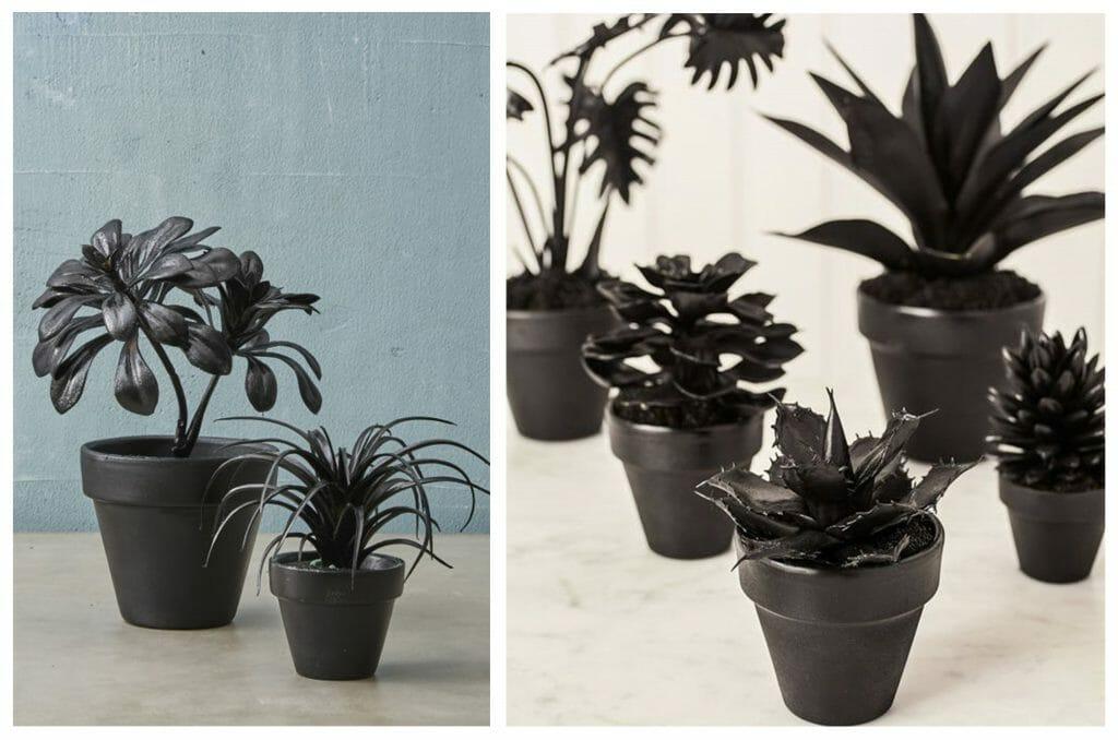 halloween decorating black plants