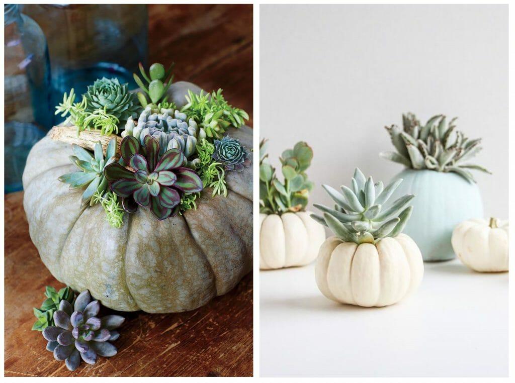 halloween decor trends pumpkin with succulents