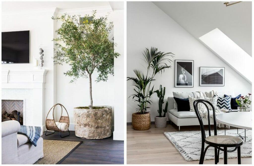winter design trends plants