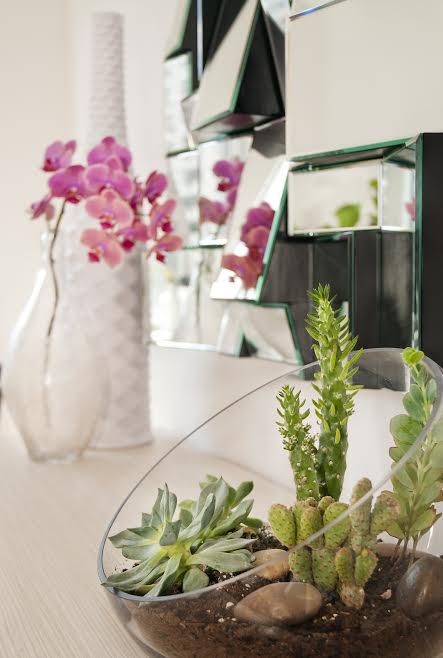 low maintenance houseplant succulents