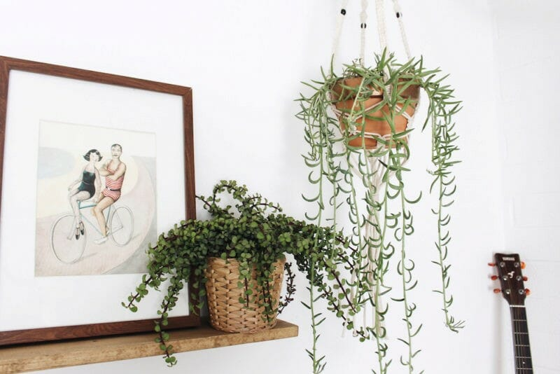 spring interior design trends plants