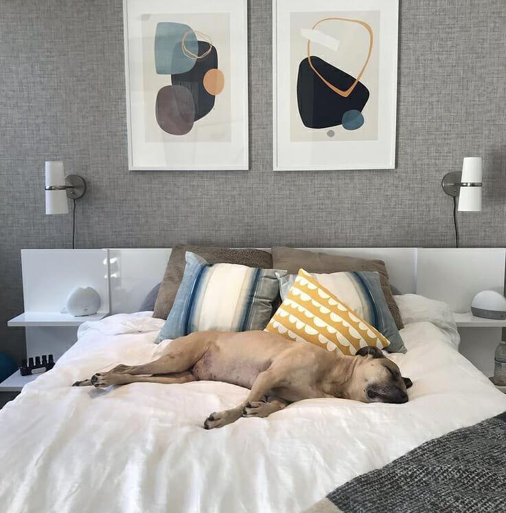 Modern mens bedroom interior design with a sleepy dog