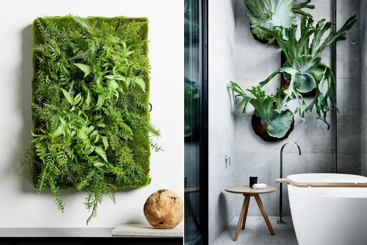 Indoor plant design for walls