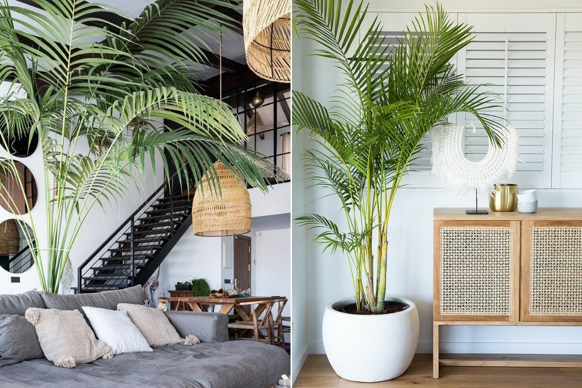 Living room design with palm plants
